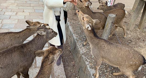 もうひとつの奈良のシンボル・鹿