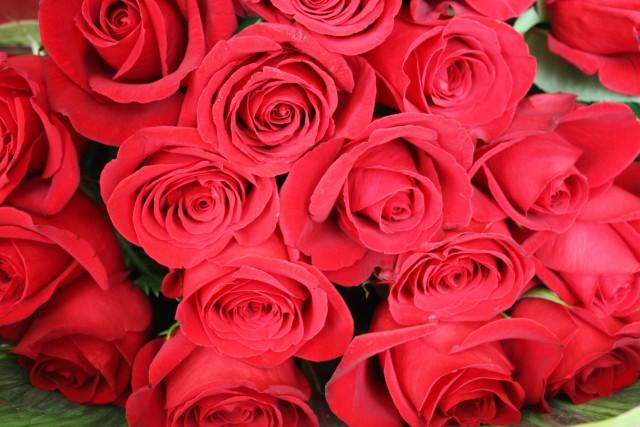 プロポーズで人気のお花のおすすめ