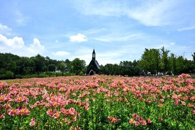 牧歌の里 標高1000mの観光牧場・動物園。季節の花が満開